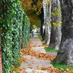 Fall Foliage in Oklahoma City (2009)
