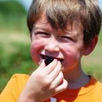 Picking Blackberries In Oklahoma City