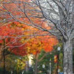This Oklahoma Life: Fall Colors in Linwood
