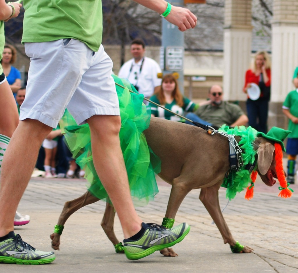 Dogs in Parade