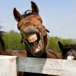 Friday: Laughing Horse Post (It&#8217;s about time.)