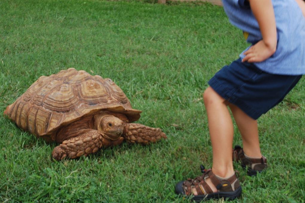 Wild Kratts Birthday Party Turtle