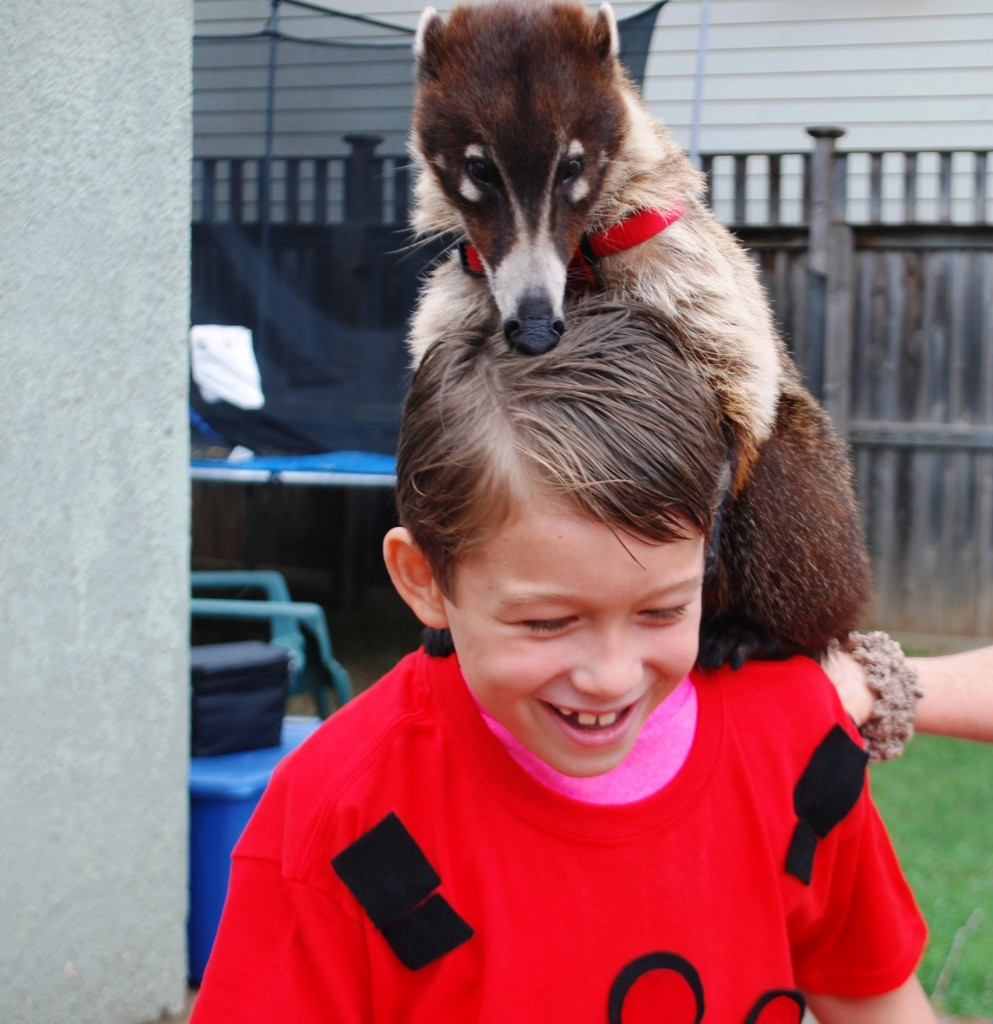 Wild Kratts Birthday Party Extreme Animals