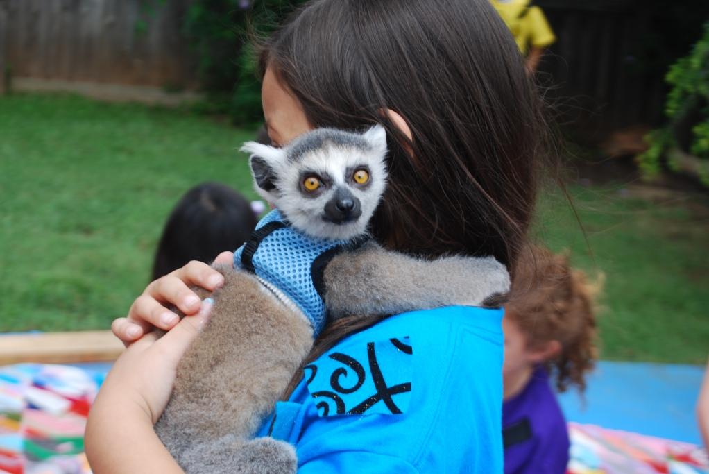 wild kratts birthday party animals lemur