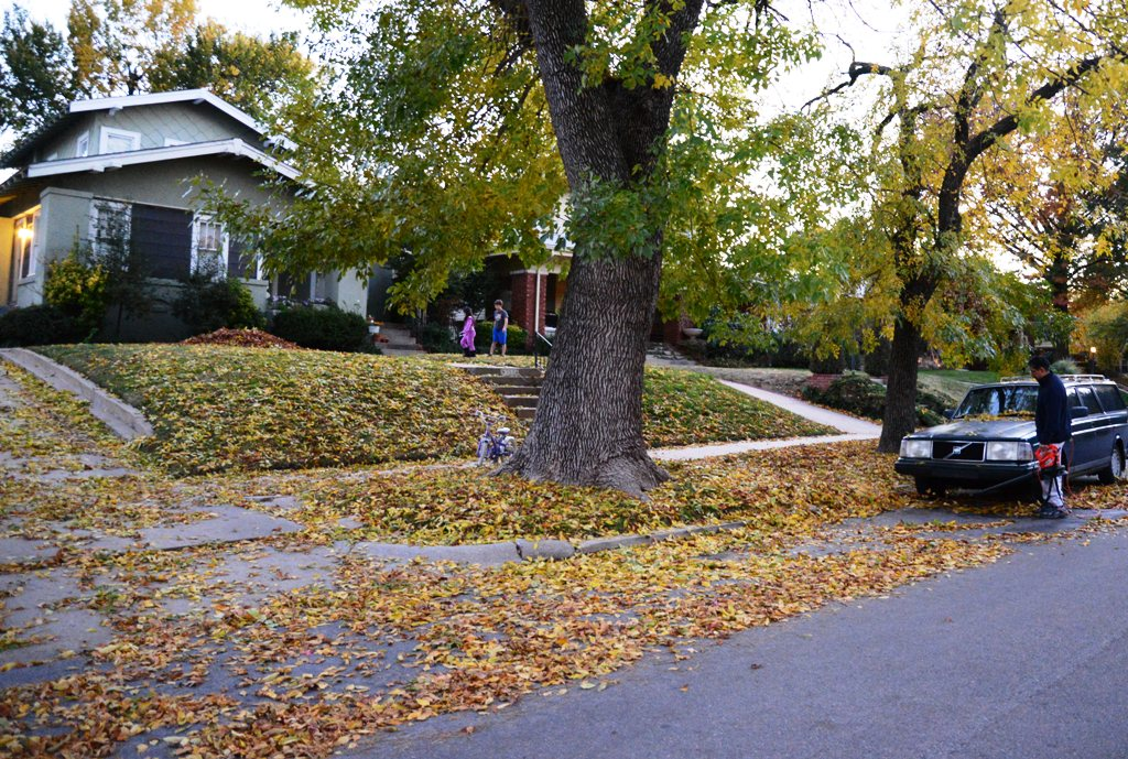 Fall Leaves in the Street