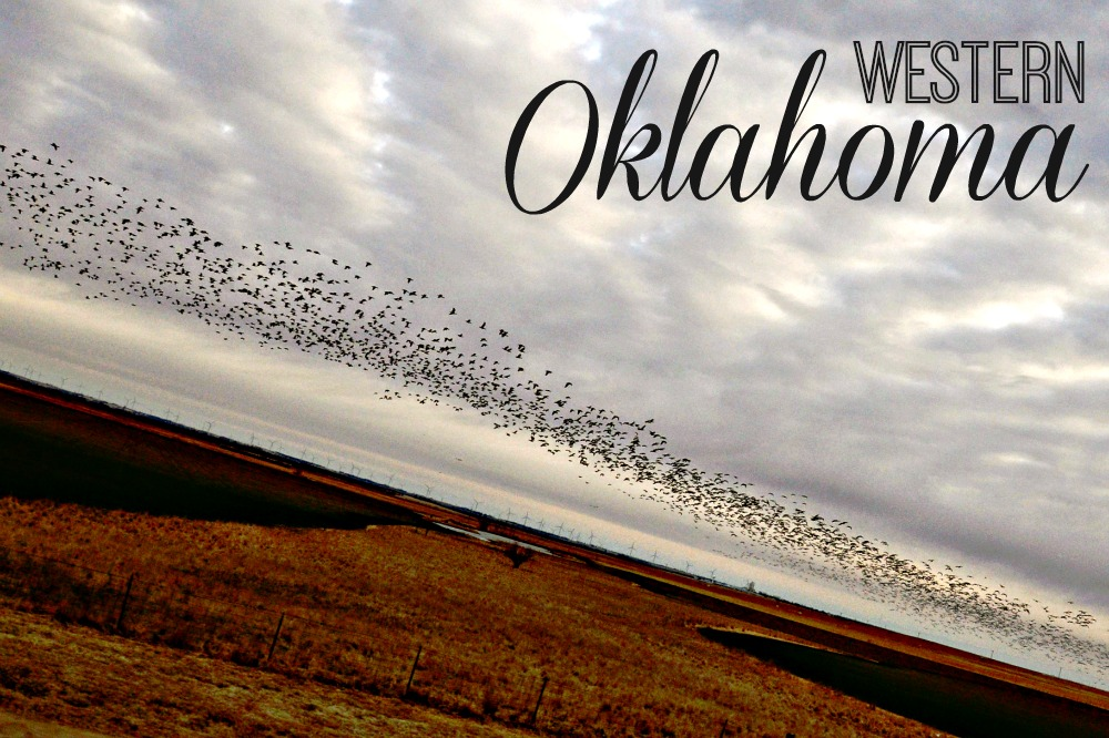 Flock of Birds Western Oklahoma