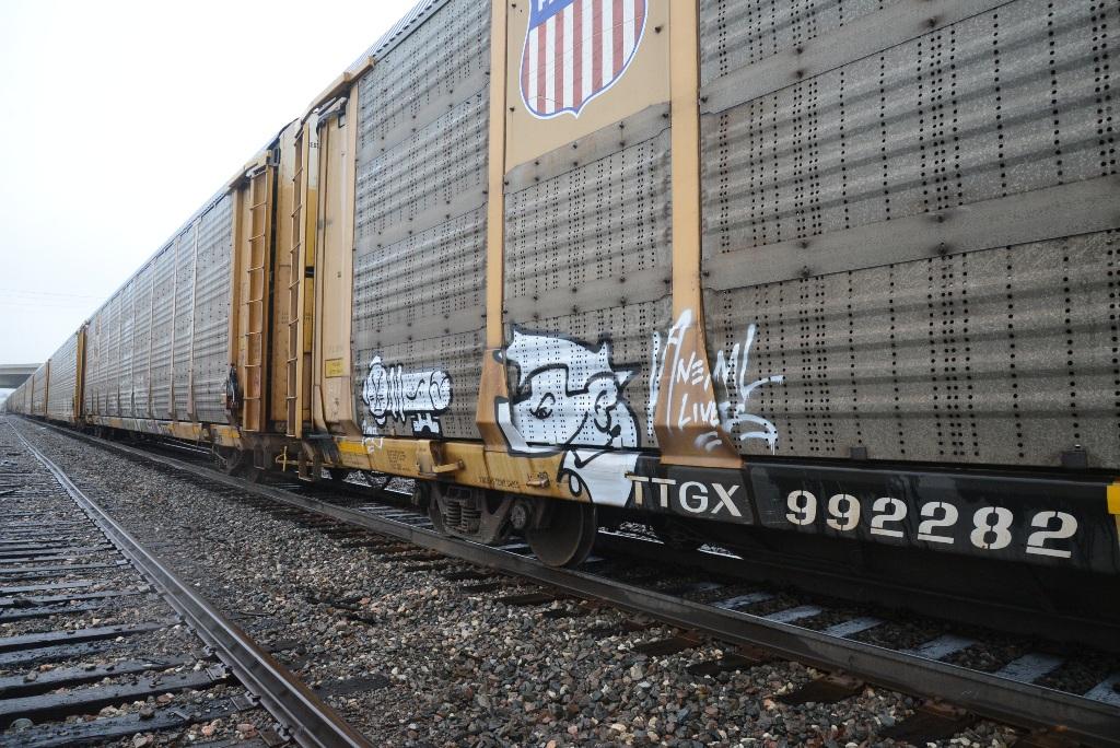ANEMAL LIVES graffiti
