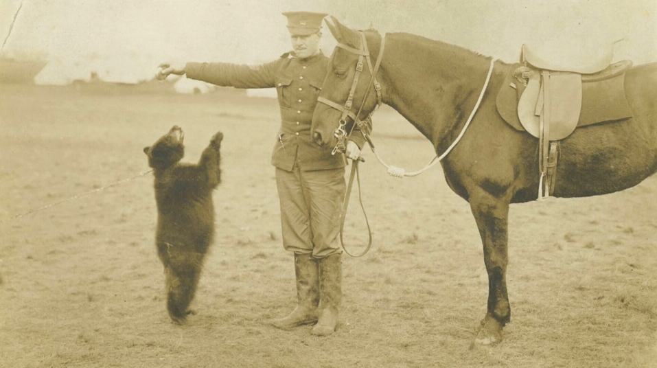 Real Bear inspired Winnie the Pooh