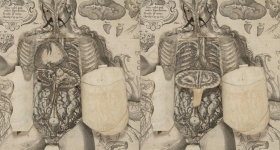See Unique Medical Pop-Up book from 1661