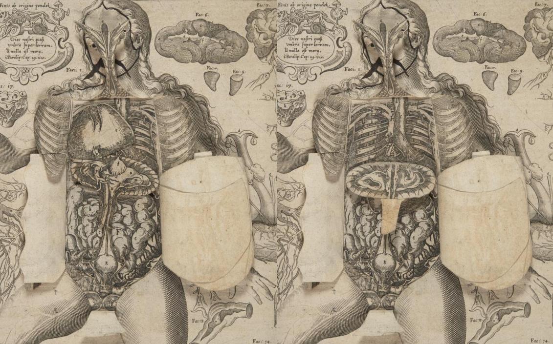 johannis anatomy book