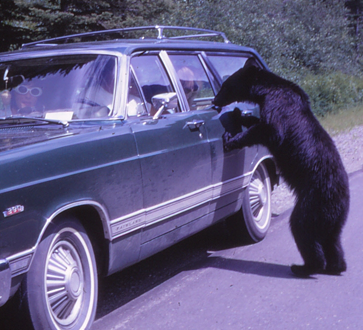 Yellowstone National Park, 1968