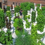 A Tower Garden for Generation Z