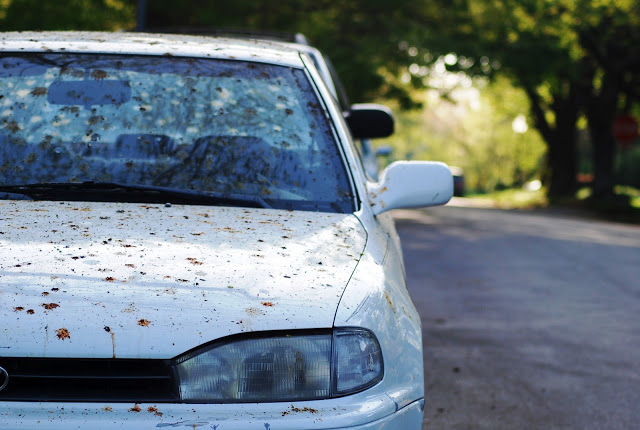 Car covered in bird poop