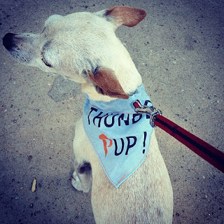 Thunder Pup Dog Bandana