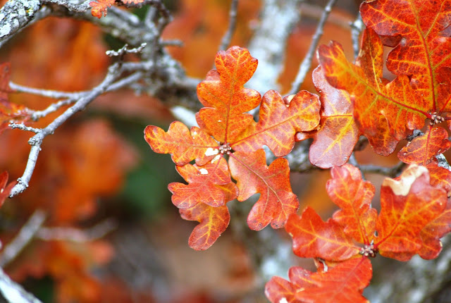 Fall foliage in Oklahoma